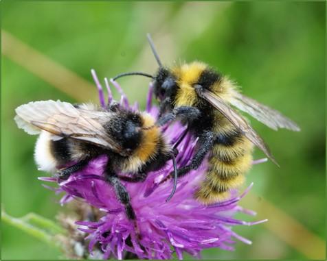 MBNats_2018_03_Bees2.jpg